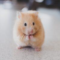 Wat is mijn talent: daar zit ik dan bij de hamster